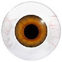 TORSO LIGHT O-Nr.:DTL501010